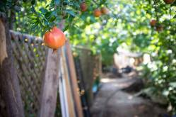 Drought-hardy food forest