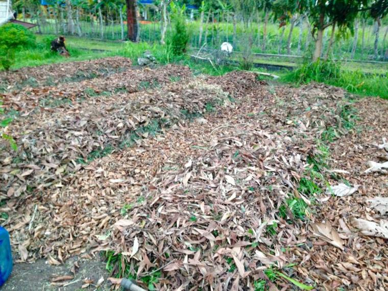 Sheet_Mulched_Raised_Sunken_Beds
