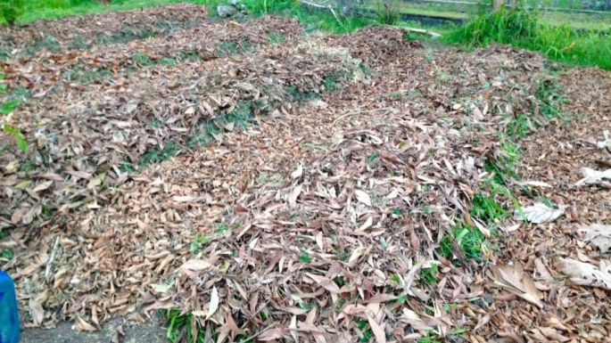 Sheet_mulched_sunken_and_raised_beds