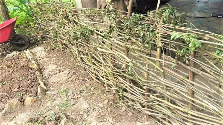Living_Fence_permaculture