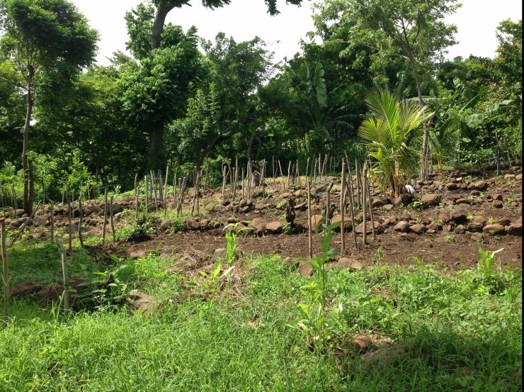 Terracing_in_Nicaragua
