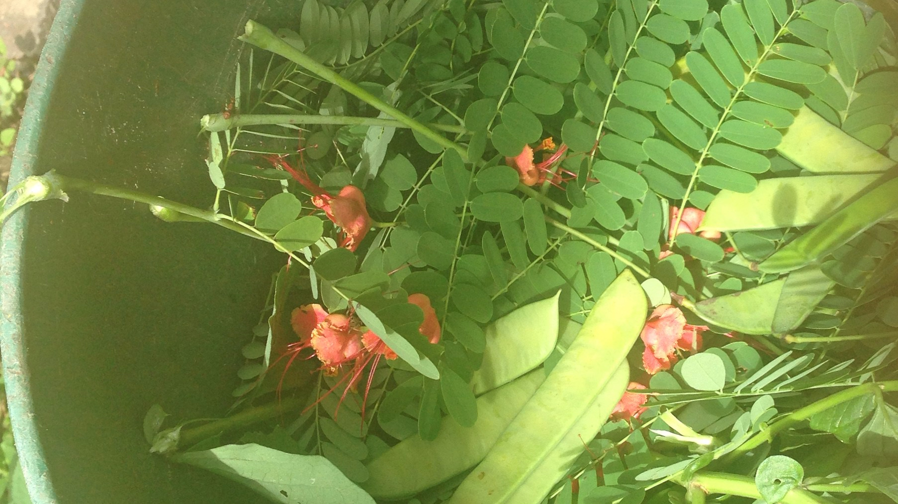 natural_insect_repellent
